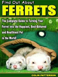 Find Out About Ferrets