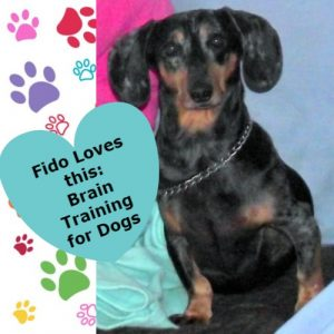 Fido Loves this: Brain Training for Dogs